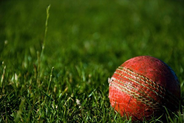 How can Cricket World Cup predictions help your organisation?